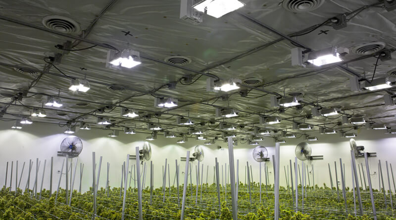 Cannabis Grow Lights Buying Guide