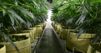 Smart Pots are Perfect for Growing Cannabis